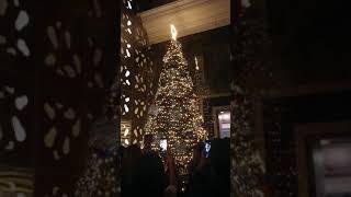 Christmas Tree Lighting at Holiday Villa Subang