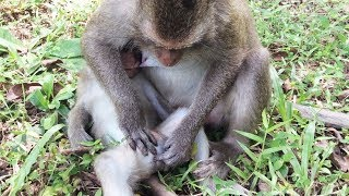 download lagu Wow What Is Mother Monkey Doing With Her Baby gratis