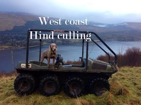 West Coast of  Scotland red deer culling