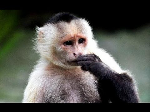 Why Monkeys Hate Mean, Selfish People
