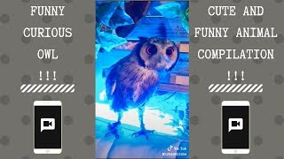 Funny Curious Owl | NEW Funny and cute Animal-Compilation | 2018 P.2