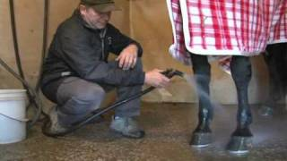 Tips of the Trade - Tying up first aid-- USTA harness racing Hoof Beats standardbred