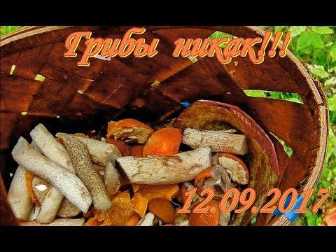 Грибы собираем. 12.09.2017
