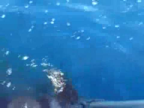 BASS STRAIGHT MAKO SHARK FISHING Part 1