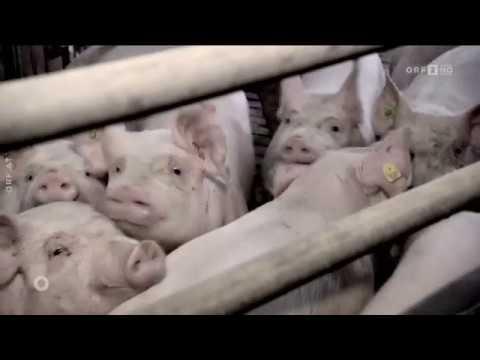 Der Toten gedenken: Christliches Begräbnis für Tiere? ORF Orientierung
