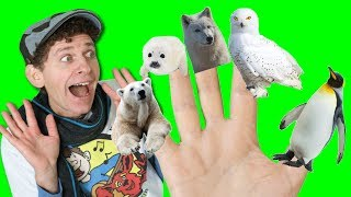 Finger Family Song - Winter Animals | What Do You See? Animals Songs | Learn English Kids