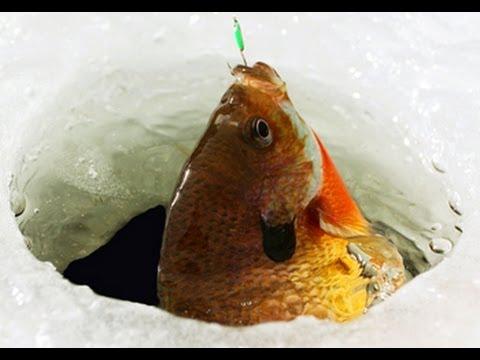 Ice Fishing Bluegill Ice Fishing Bluegill