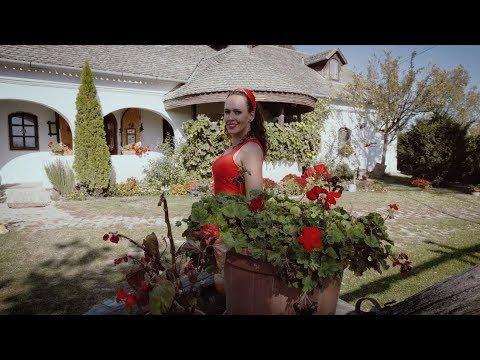 Köteles Cindy - Nebáncsvirág (Official Video)