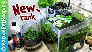NEW SHRIMP & NEW TANK SETUP for Beginners