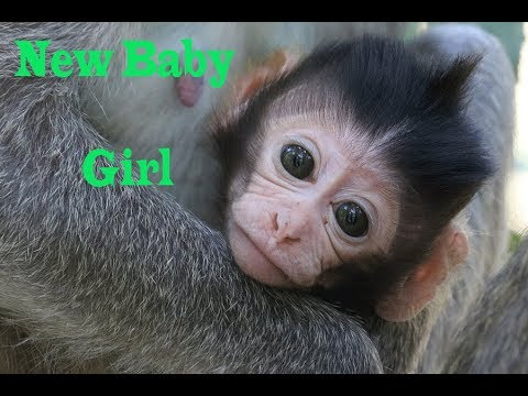 Woo New Baby Monkey -Young mom has 5 day - old baby