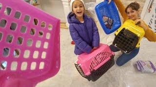 Kediciklerimiz Alina ve paticik için taşıma sepeti ve WC aldık . Kedicikleri getiriyoruz