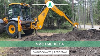 Чистые леса