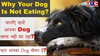 Why Your Dog Is Not Eating?? Possible reasons : The Ultimate Channel