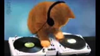 download lagu Dj Ayam Versi Kucing gratis