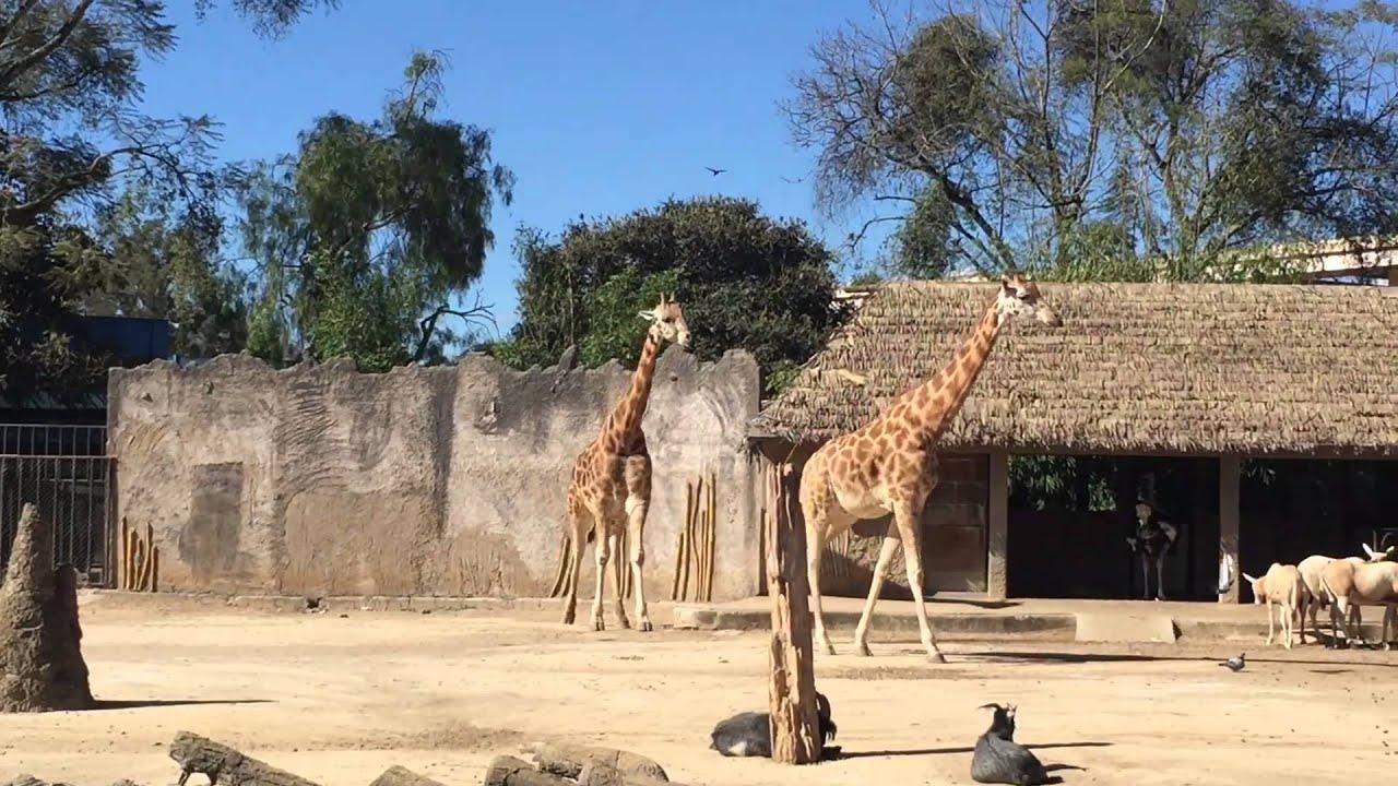 Fotos de animales en zoologicos 65