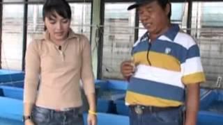Budidaya Ikan Air Tawar - Pembesaran Lele Sangkuriang