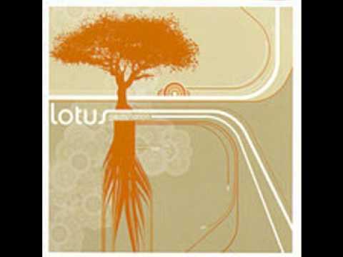 Umbilical Moonrise - Lotus
