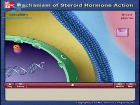 Mecanismos de Accion de Hormonas Esteroides - YouTube