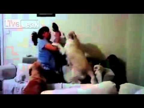 Un perro protege a un niño que fue golpeado por su madre