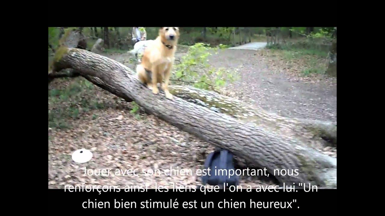 Cours collectif éducation canine dressage chiens toulouse