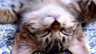 Vídeo 158 de Salvatore Adamo