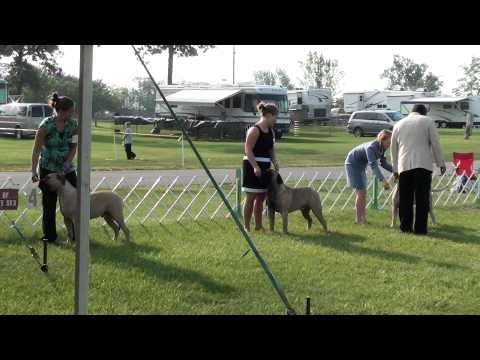 2010 Muncie IN Friday, Winners Dog Line Up