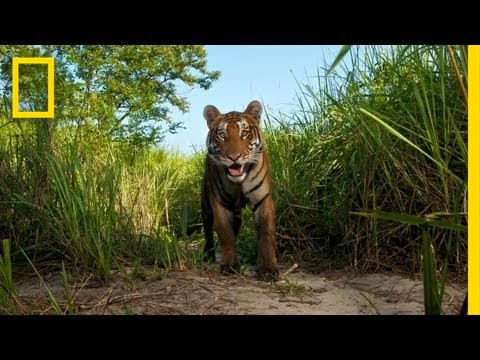 National Geographic Live! - Steve Winter: On the Trail of the Tiger