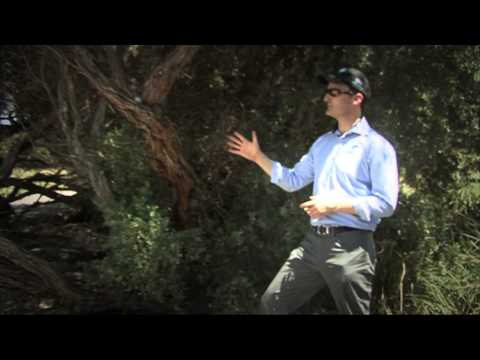Drummond Golf Rules - Ball up a tree