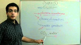 Biology - Chapter 4 - introduction to excretion - Abdallah Reda El Sayed