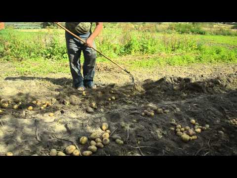 Вилы для копки картошки своими руками
