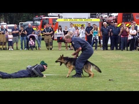 Police Dogs Demonstration, Pukekohe VFB Open Day, 20 Nov 2010