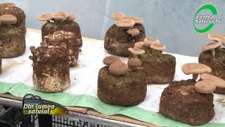Shiitake, regele ciupercilor cu proprietăți medicinale