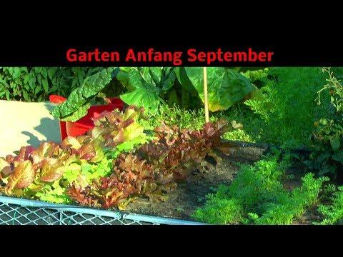 Garten Rundgang Anfang September Die Vielfalt eines kleinen Garten entdecken