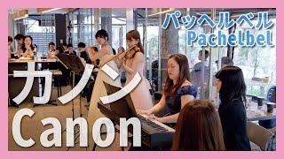 カノン フルート バイオリン ピアノ 朝 クラ Asa Kura