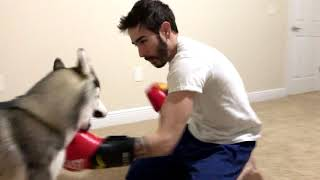 Teaching My Dog To Box