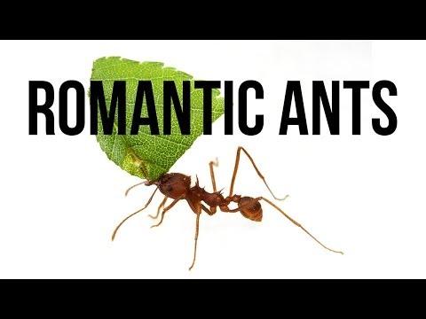 Romantic Ants