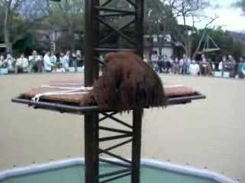 砥部動物園 オランウータン