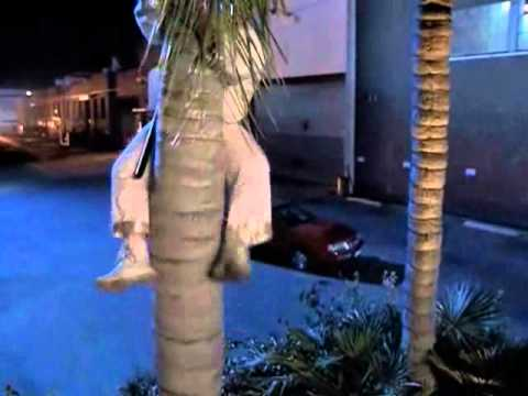 Un ninja en Beverly Hills - escena de la palmera (LATINO)