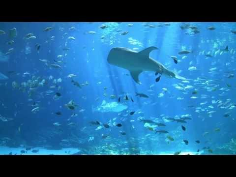largest aquarium tank in the world - world's largest aquarium