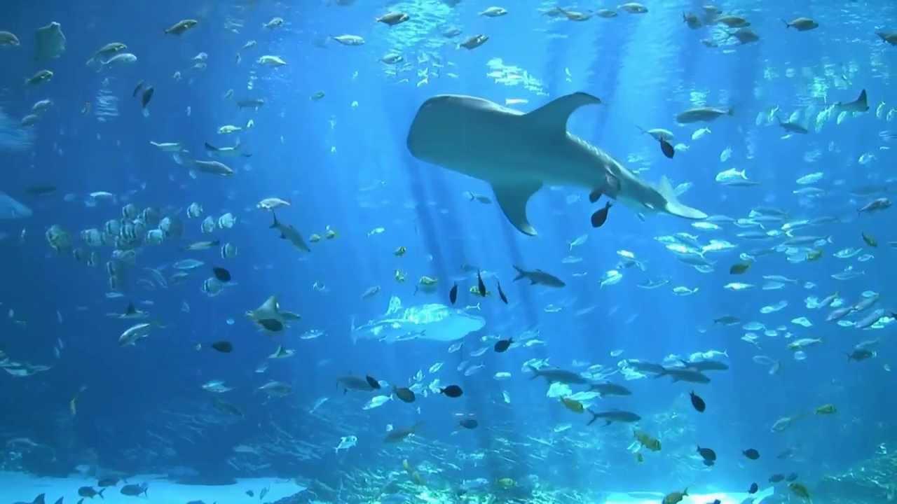 Image Result For Largest Aquarium In The World