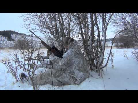 Coyote Control Specialists Episode#10, 5 Coyotes, Calling Coyotes, Predator Hunting