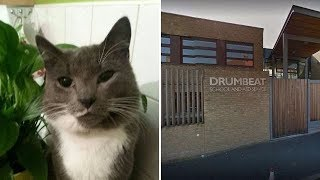 Decapitated cat in school playground 'could be 400th v ictim of Croydon cat k iller'