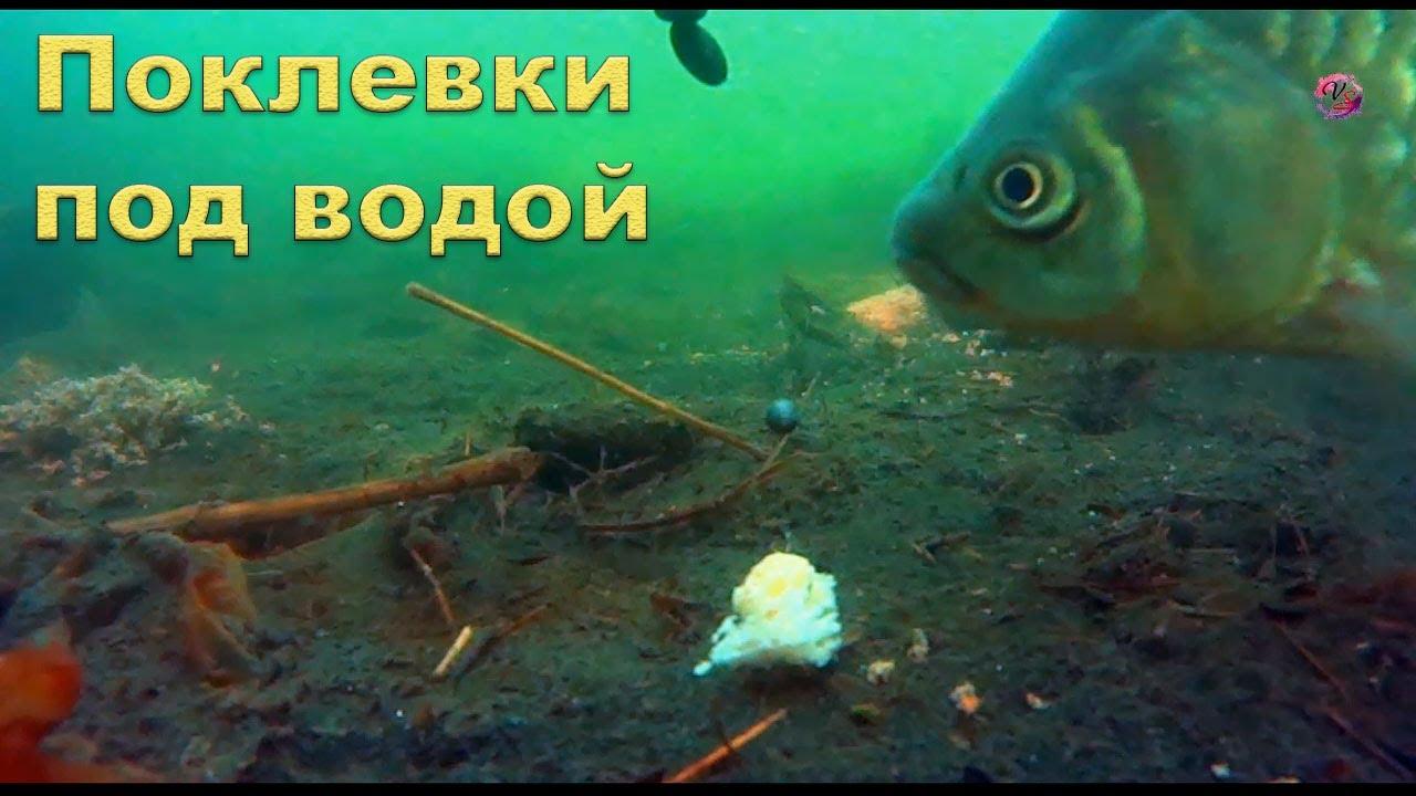 видео клев рыбы под водой