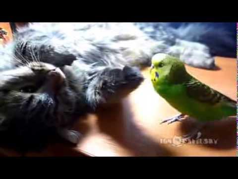 Юмор - Животные