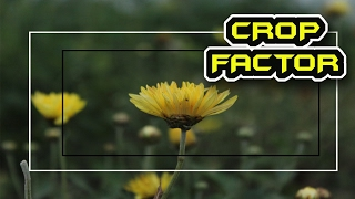 What is Crop Factor - Cinematography