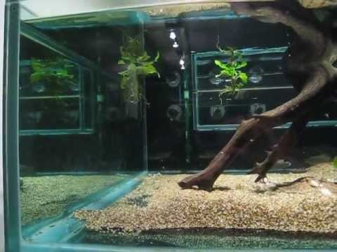 How to get crystal clear fish tank water totw 1 how for Clear water fish tank