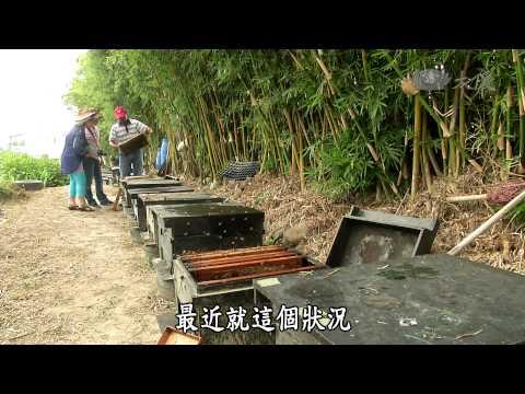 台灣-小人物大英雄-20150112 蜜蜂的滋味