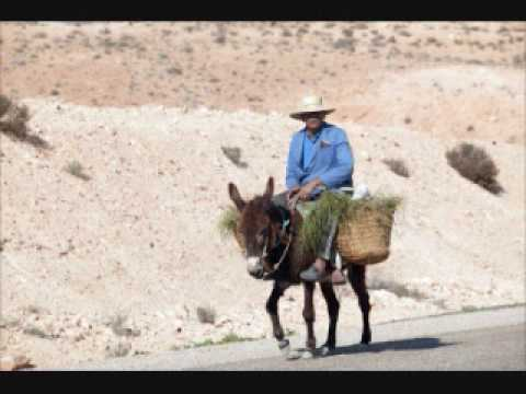 donkey riding by great big sea