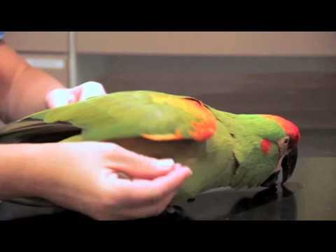 djurkliniken