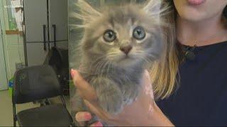Animal shelter in Gaston County at maximum capacity